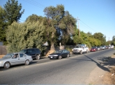 traffic in sebastopol